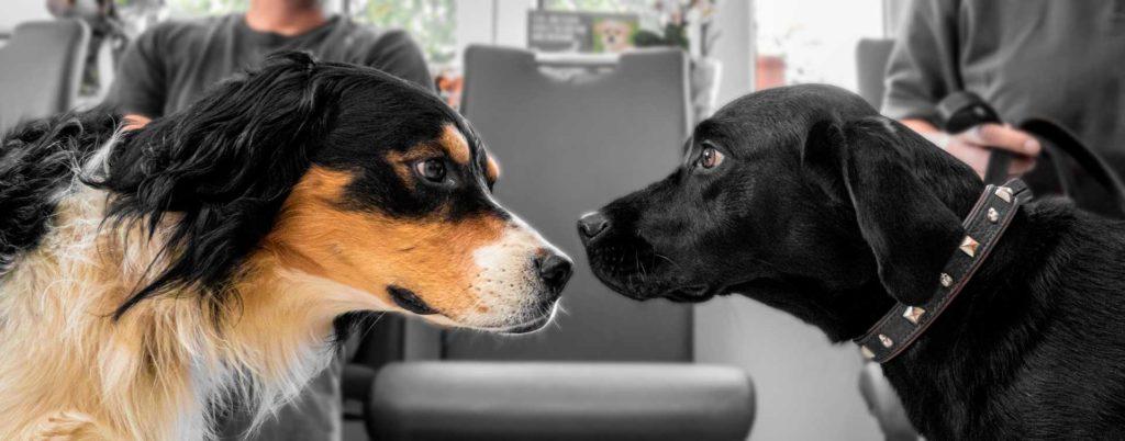 tierarztpraxis-renner-arnschwang-hunde-medizin-fell