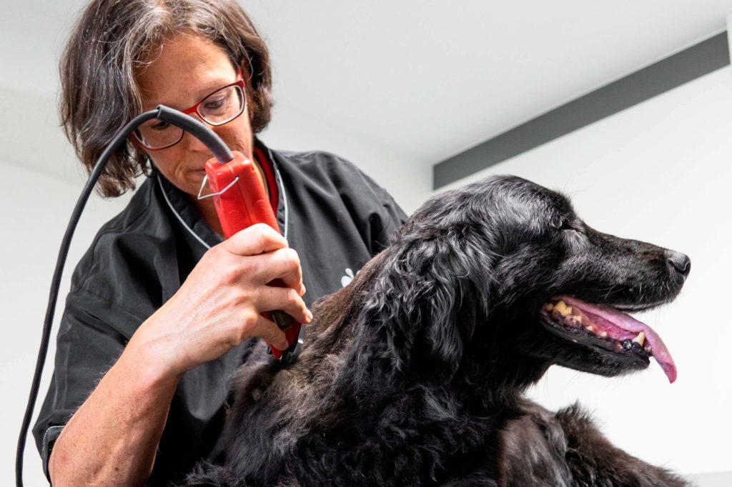 tierarztpraxis-renner-arnschwang-scheren-trimmen